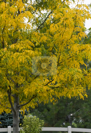 First sign of autumn stock photo, Leaves on the trees starting to take autumn colors by RCarner Photography
