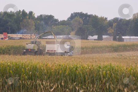 Harvesting the feed corn stock photo, Chopping corn for animal feed. by RCarner Photography