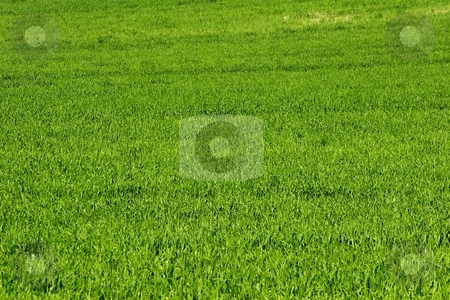 Field of grass stock photo, Green field by Mark Yuill