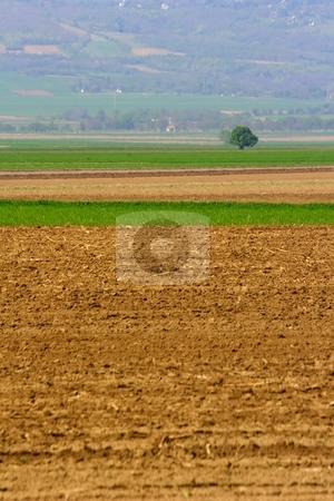 Tree and farmland stock photo, Lone tree and farmland by Mark Yuill