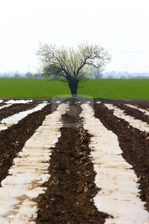 Tree and farmland stock photo, Lone tree and farmland by Mark Yuill