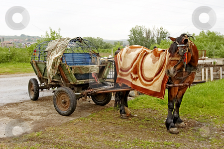 Horse and cart stock photo, Horse and cart by Mark Yuill