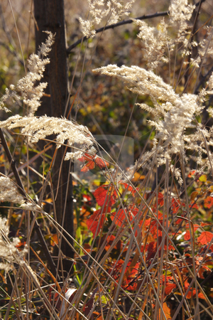 Wild mountain plants stock photo, Wild mountain plants in early winter by Mark Yuill