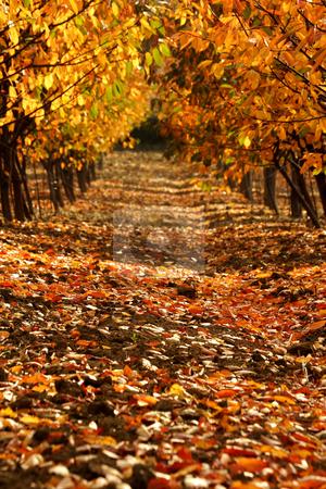 Autumn  stock photo, Pathway in autumn by Mark Yuill