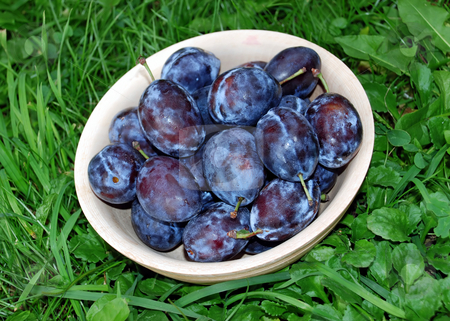 Plums over green grass stock photo, Blue ripe plums in wooden bowl over green grass by Julija Sapic
