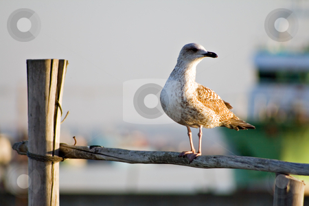 Seagull in pillar stock photo, Seagull in pillar by Paulo Resende