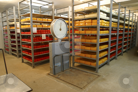 Cheese storage in dairy  stock photo, Cheese in cold storage in modern dairy by Mark Yuill