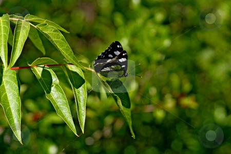 Butterfly on leaf stock photo, butterfly on leaf in montenegro by Mark Yuill