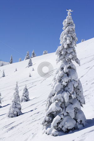 Snow covered mountain and fir trees stock photo, Winter view of snow covered mountain and fir trees by Mark Yuill