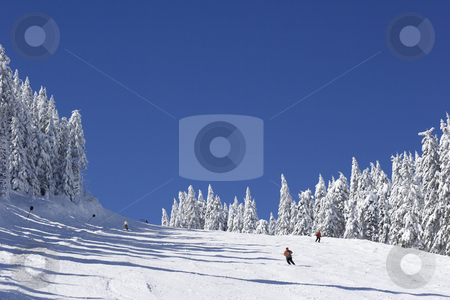 Ski slope on mountain side stock photo, Ski slope on pine covered mountain side by Mark Yuill