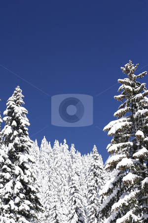 Snow covered mountain and trees stock photo, Winter view of snow covered mountain and trees by Mark Yuill