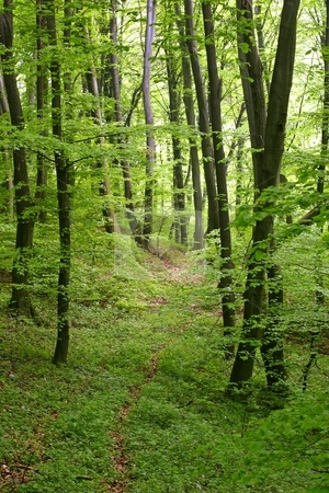 Lush forest stock photo, Lush green forest by Mark Yuill