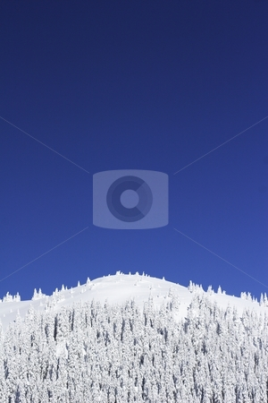 Mountain top stock photo, Snow covered trees  on the mountain by Mark Yuill