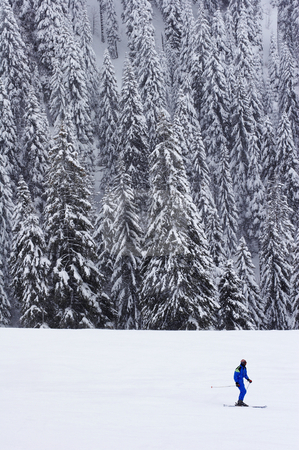 Lone skier stock photo, Lone skier with a pine forest in the background by Mark Yuill