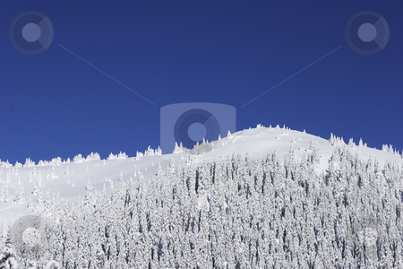 Snow covered  mountain with pine trees stock photo, Snow covered  mountain with pine trees and cloudless blue sky by Mark Yuill