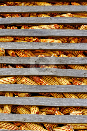 Organic corn feed  stored for winter stock photo, Organic corn animal feed stored for winter by Mark Yuill