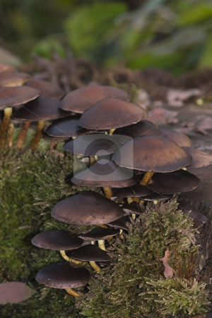 Mushrooms on Forest Floor stock photo, Closeup photo of mushrooms on the forest floor during the Fall by Inge Schepers
