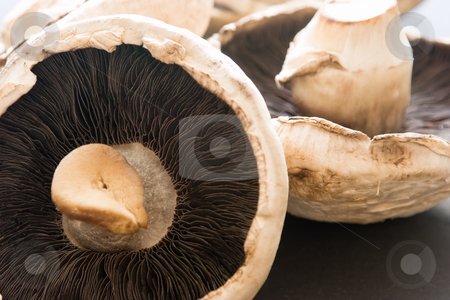 Mushrooms stock photo, A bunch of mushrooms by Nicholas Rjabow