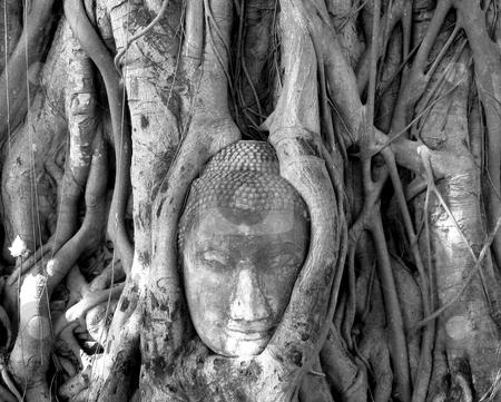 Buddha Head Held by Roots stock photo, The head of a statue of the Buddha is held by the roots of a strangler fig. Wat Mahatat, Ayutthaya, Thailand by Martin Darley