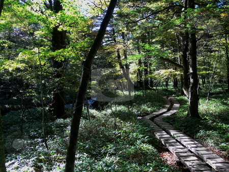 Forrest Boardwalk stock photo, A boardwalk winds its way through through the forest. Nikko National Park, Tochigi Prefecture, Japan by Martin Darley