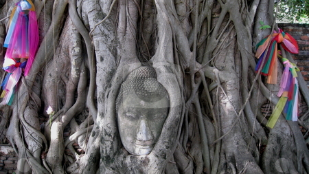 Buddha Head stock photo, The head of a statue of the Buddha is held by the roots of a  fig. Wat Mahatat, Ayutthaya, Thailand by Martin Darley