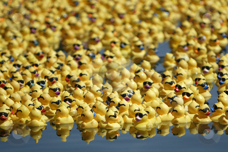 Rubber Duck Race stock photo, July 24,2004 :  Thousands of Whaling Days rubber ducks made their way to the shore of Silverdale park.  The first duck to reach shore that was purchased by a community member would be worth a new truck.  All the money made from the annual Whaling Days Duck Race goes back to the community of Silverdale, Washington. by Jesse Beals