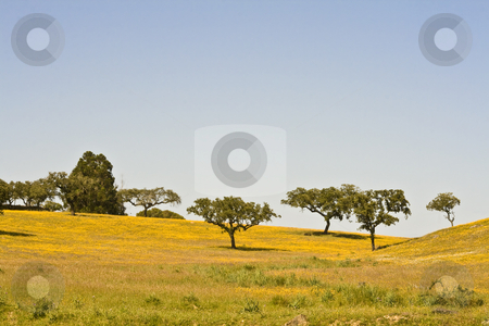 Spring landscape stock photo, Spring landscape in Alentejo - Portugal by Paulo Resende