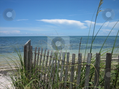 Beach Dunes with fence stock photo, Beach in Miami with dunes and fence by Tom Falco