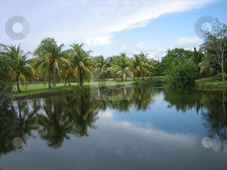 Fairchild Tropical Gardens, Miami Florida stock photo, Florida landscape. Fairchild Tropical Gardens, Miami Florida by Tom Falco