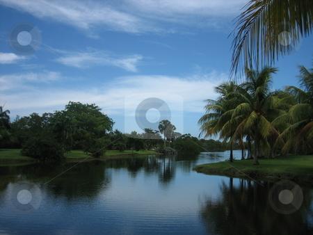 Florida scene stock photo, Florida landscape by Tom Falco