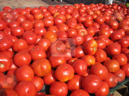 Tomatoes stock photo, Tomatoes at the farmer's market by Tom Falco
