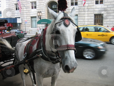 Horse stock photo, Horses in New York by Tom Falco