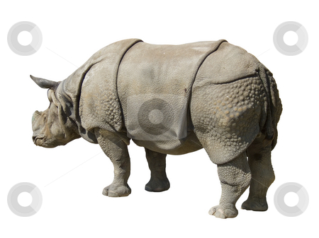 Rhinoceros isolated on white background stock photo, Rhinoceros isolated on white background, path inclued by Paulo Resende