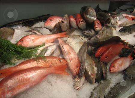 Fish for sale at Hamptons Market stock photo, Fresh fish for sale at Hamptons Market by Tom Falco