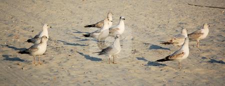 Birds on the Beach stock photo,  by Liane Harrold