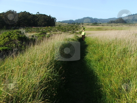 Woman wading through tall grass stock photo, A woman wades through shoulder high grass on a coastal access path to the Pacific Ocean near California's scenic highway 1 south of San Francisco. by Dennis Thomsen