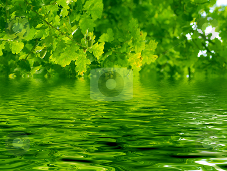 Beautiful oak tree and water stock photo, Beautiful oak tree with reflection in river by Laurent Dambies