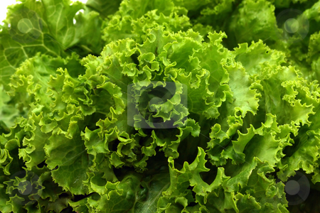 Lettuce close-up stock photo, Close-up of green lettuce by Natalia Macheda