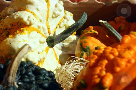 Fancy pumpkins stock photo, Fancy pumpkins on a peasant market under the sun light by Natalia Macheda
