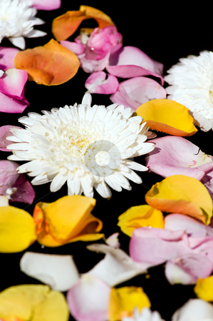 Flower petals in water stock photo, Flower petals in water by Vitaly Sokolovskiy