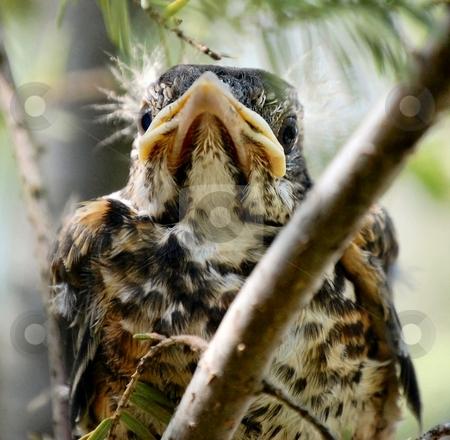 Baby Bird stock photo,  by Liane Harrold