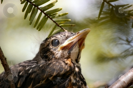 Baby Bird stock photo,  by Liane Harrold