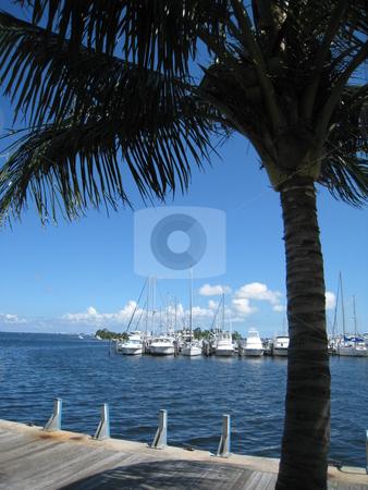 Miami waterfront, Biscayne Bay Marina stock photo, Biscayne Bay Marina, Miami, Florida, Coconut Grove by Tom Falco