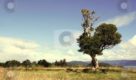 Single tree stock photo, Single tree in a golden colored field by Rafael Franceschini