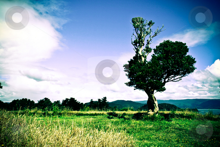 Single tree stock photo, Lomo effect of a single tree on the lawn by Rafael Franceschini