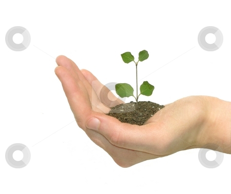 Growth stock photo, A hand carefully holding a young plant in its palm. by Great Divide Photography