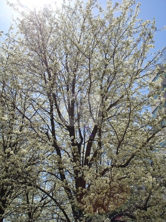 Trees In Spring stock photo,  by Ritu Jethani
