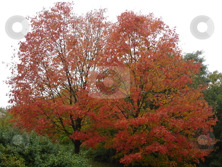 Fall Colors stock photo,  by Ritu Jethani
