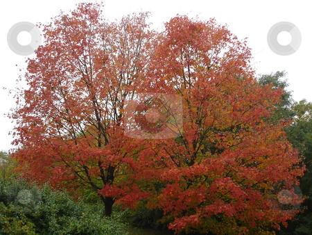 Fall Colors stock photo,  by Ritu Jethani