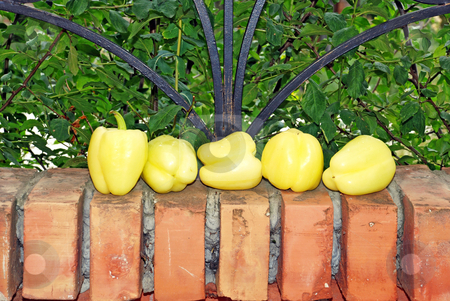 Yellow paprika on brick fence stock photo, Yellow rape juicy paprika over brick fence and green leaves by Julija Sapic